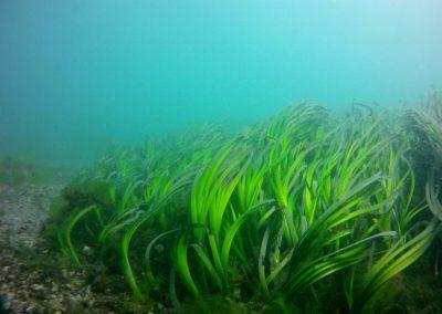 O Oceano dá bom clima